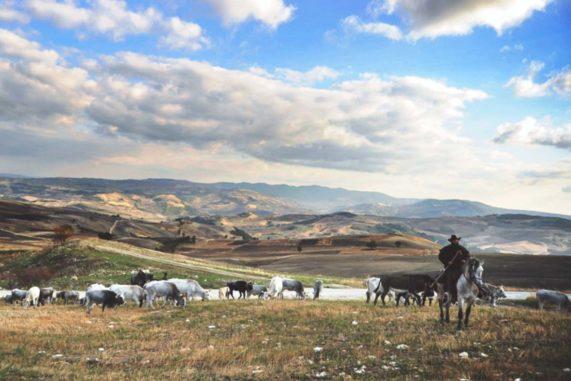 Transumanza d'Italia dalla Puglia al Molise