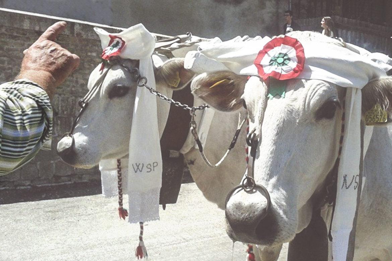 La tradizione di San Pardo a Larino